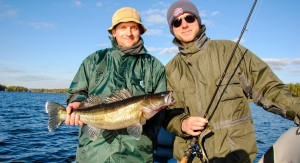 Zander caught during a guided zander fishing trip in Sweden.