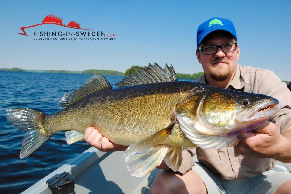 Zander Fishing: Pelagic Vertical Jigging