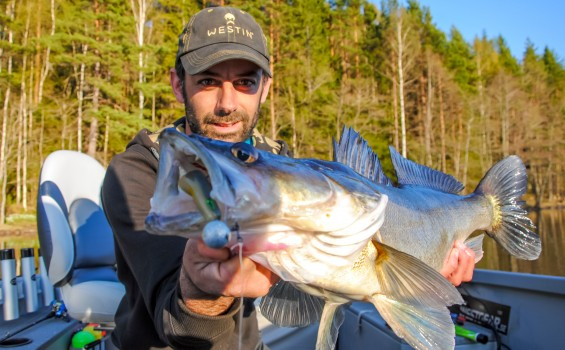 Vertical Fishing for Zander in Sweden.