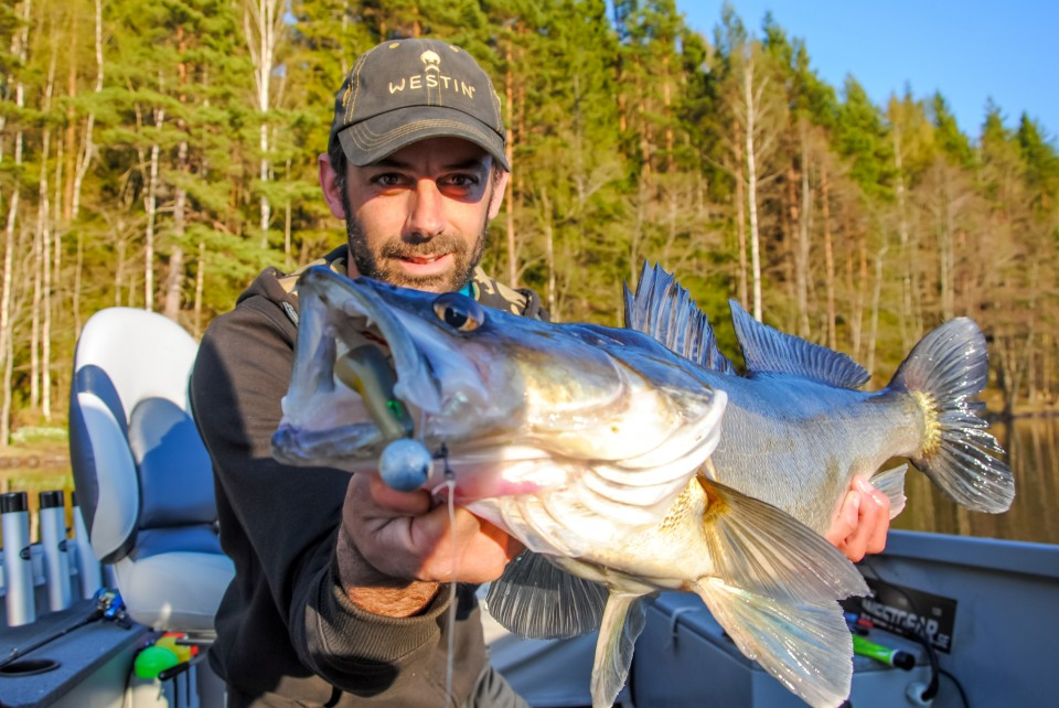 Vertical Fishing for Zander in Sweden.