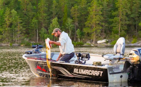 Summer pike fishing Sweden in our Alumacraft boat from WestGear AB.
