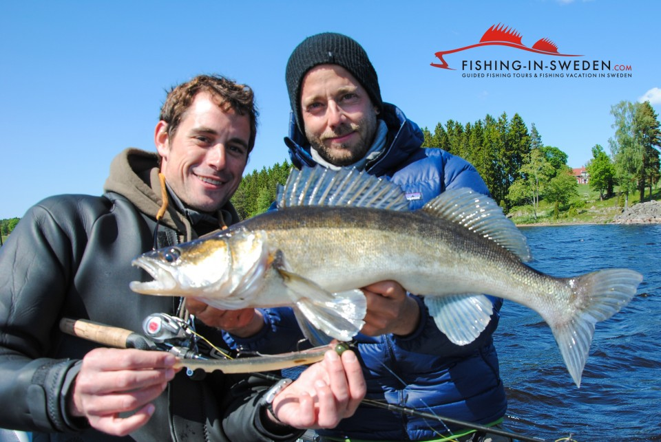 Learn pelagic vertical jigging with a fishing guide from Fishing Sweden.