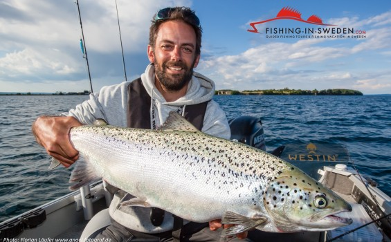 Big trout Sweden caught while fishing vertical in lake Vättern.
