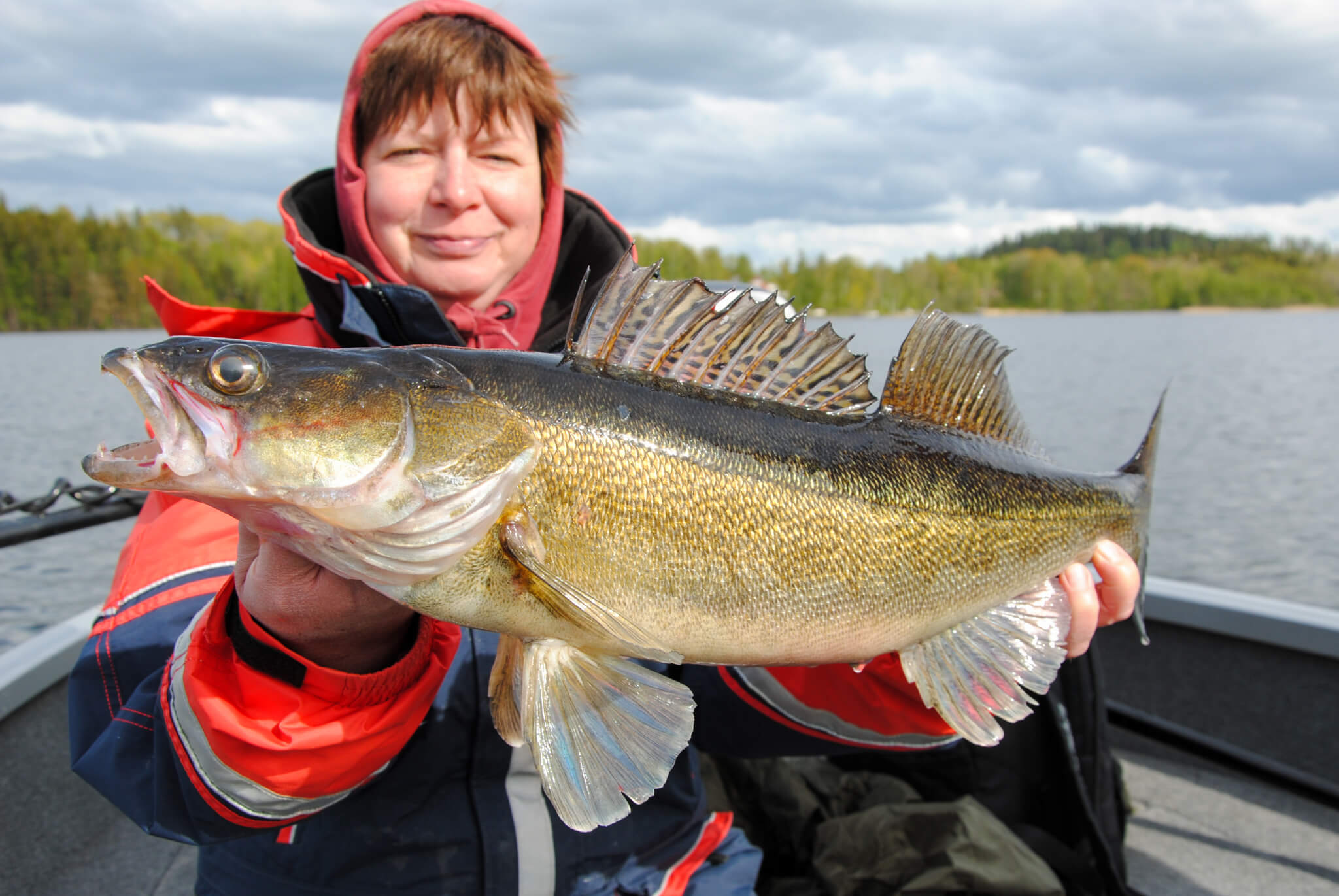 Zander Fishing in Sweden - Pikeperch Fishing