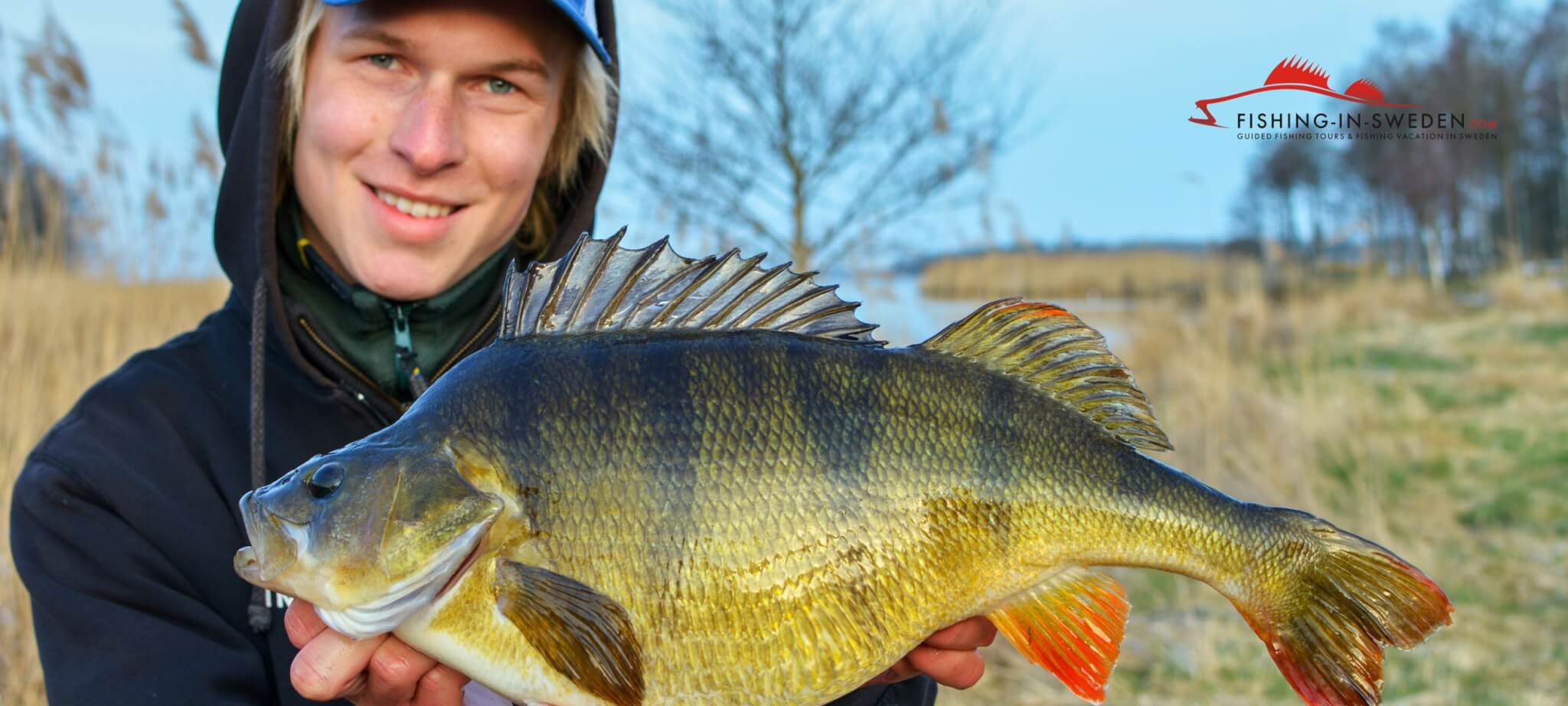 Perch Fishing in Sweden